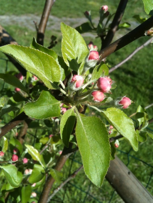 Orchards and Flowers Budding::Happy Earth Day